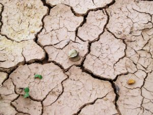 drought-cracked-earth poor crop yields
